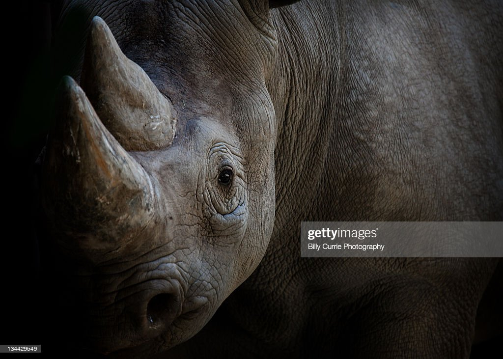 Rhino : Stock Photo
