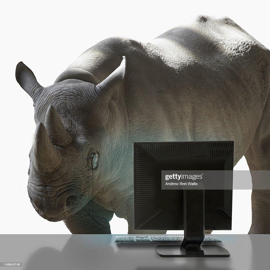 Rhino wearing monocle studies desktop computer : Stock Photo