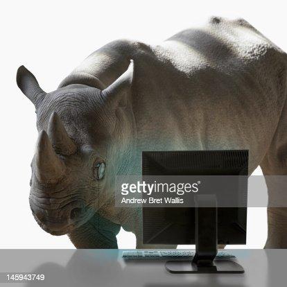 Rhino wearing monocle studies desktop computer : Stockfoto