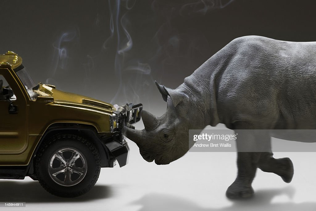 Rhinoceros charges and damages a motor vehicle : Stock Photo