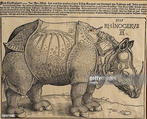 Rhinoceros Engraving 1515 'In May 1513 they brought this living animal from India to Lisbon for the mighty King Emanuel They call it rhinoceros'...