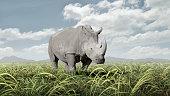 Rhinoceros grazing in rural field