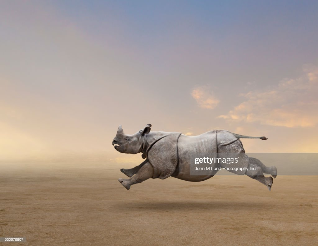 Rhinoceros running in rural field