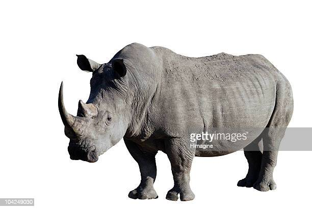 Rhinoceros with clipping path included