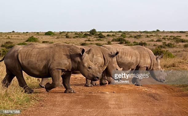 Rhinos Crossing