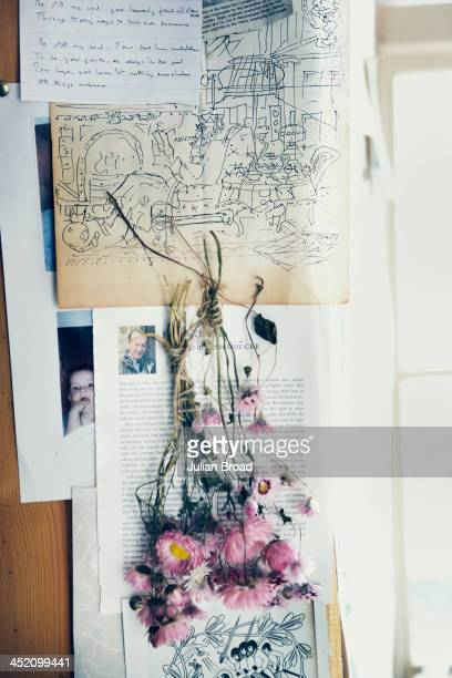 Rhodanthe manglesii hung to dry Photographed for the New York Times Style Magazine on August 8 2013 in Kelso Scotland