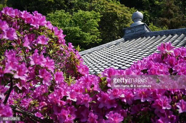 Rhododendron in temple in Kamakura