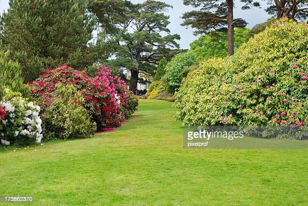 Rhododrendron bushes