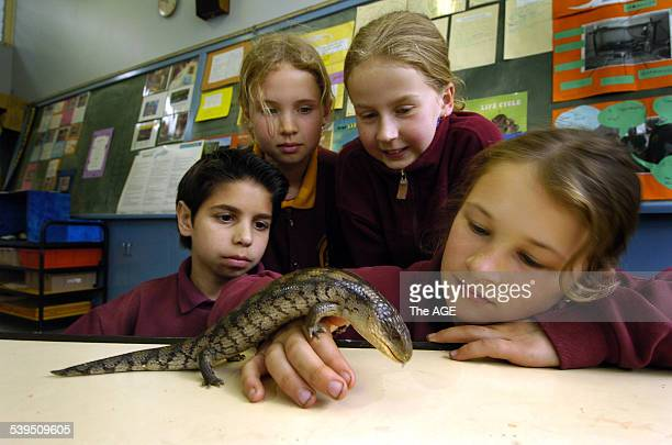 Rhys Djukich Michelle Murray Kelly Johnson and Taylah Davis from the Drouin Primary School make friends with Lizzy the bluetongue lizard Taken 9...