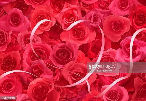 Ribbon on Roses