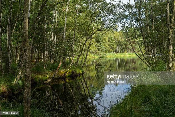 Ribnitzer great moorland