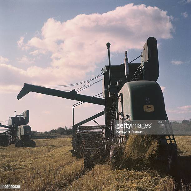 Rice Culture Combine Harvester In France On 1961