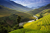 Rice Farm in Vietnam 2015, Mu Cang Chai.