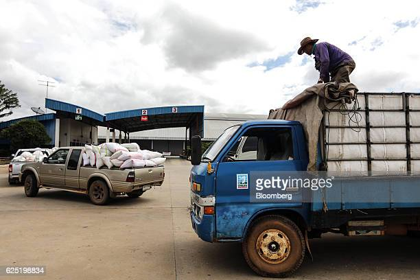 A rice farmer removes tarps from his truck at a Yingpaiboon Rice Mill Ltd warehouse in the Samrong district of Ubon Ratchathani Thailand on Tuesday...
