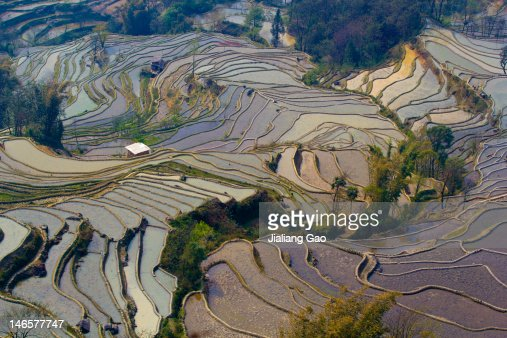 Rice fFields in Yuanyang