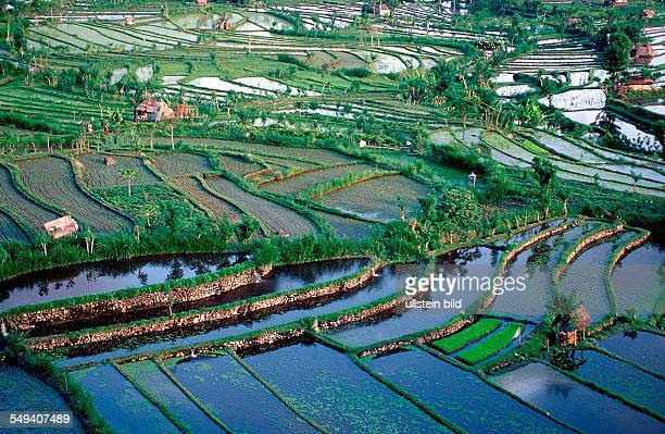 rice field aerial view Indonesia Indian Ocean Bali