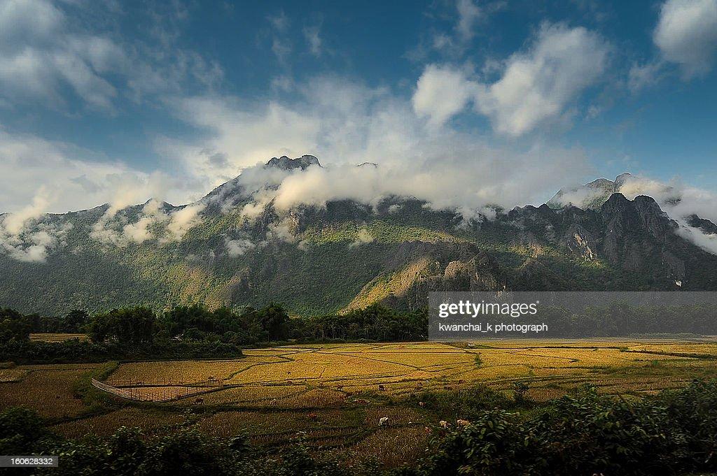Rice field at Vang Vieng
