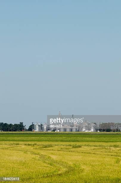 Rice Field in Arkansas
