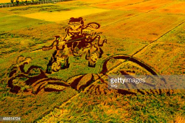 3D rice field painting comes into best viewing period in Shenyang Liaoning Province China on 14th September 2014