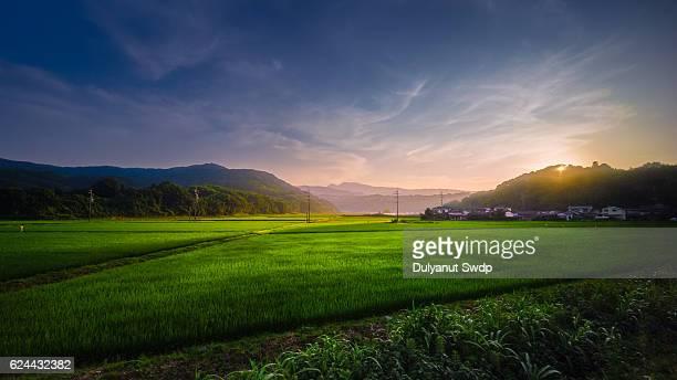 Rice field sunset at Saga , Japan
