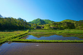 Rice fields and woodlands