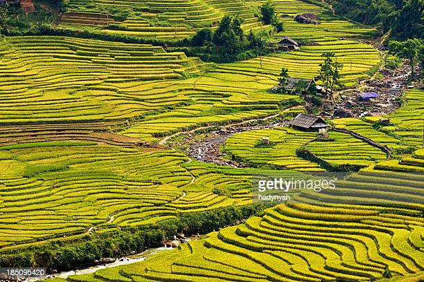 Reis Felder in Sapa Stadt in North Vietnam