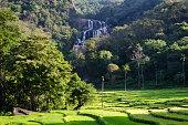Rice Fields of rathna ella falls near knuckles mountain range, Sri Lanka.