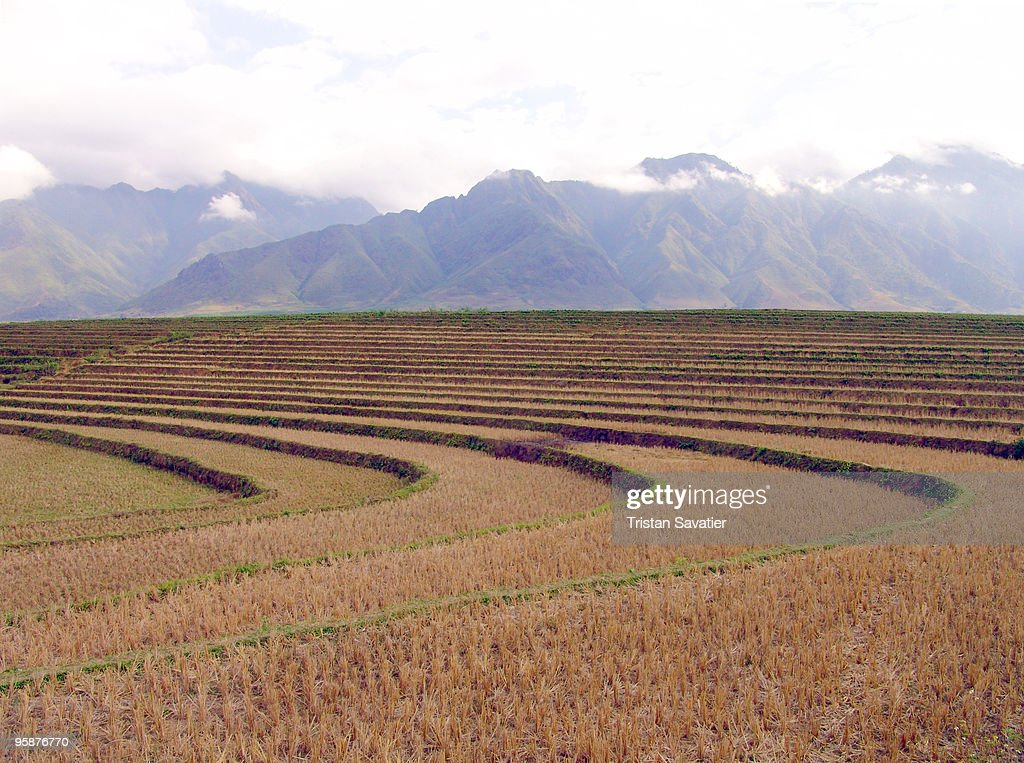 Rice fields terrace farming stock photo getty images for Terrace farming