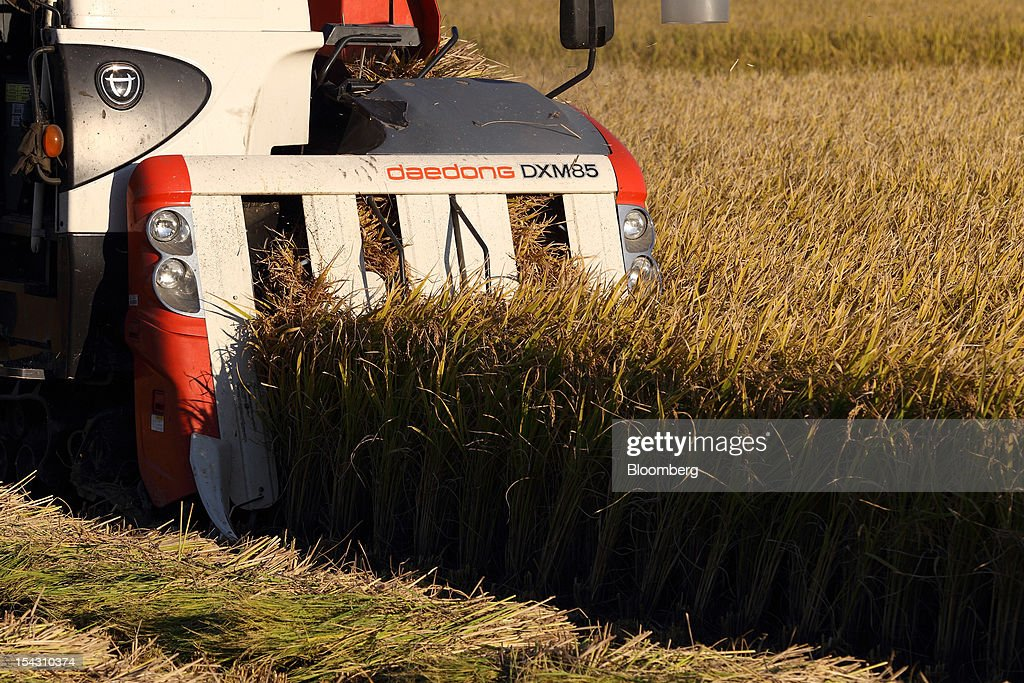 Rice is harvested with a combine harvester in a paddy field in Asan, South Korea, on Thursday, Oct. 11, 2012. South Korea will boost production of rough rice to 5.801 million metric tons in the year that starts Nov. 1, compared with an estimated 5.616 million a year earlier, the U.S. Department of Agriculture's Foreign Agricultural Service said on Aug. 2 in a report posted on its website. Photographer: SeongJoon Cho/Bloomberg via Getty Images