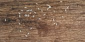 rice on old wood background
