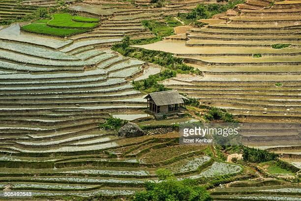 Rice paddies at Sapa Valley, Northern Vietnam