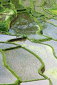 Rice paddies elevated view