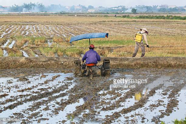 Rice paddy field after harvest in Hue city, Vietnam