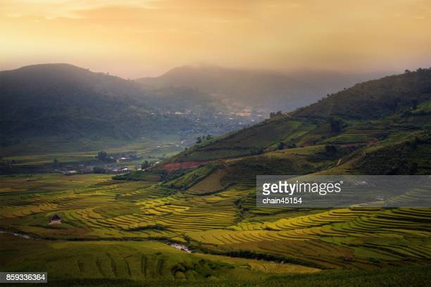 Rice paddy field on the hill of mountain in Vietnam.