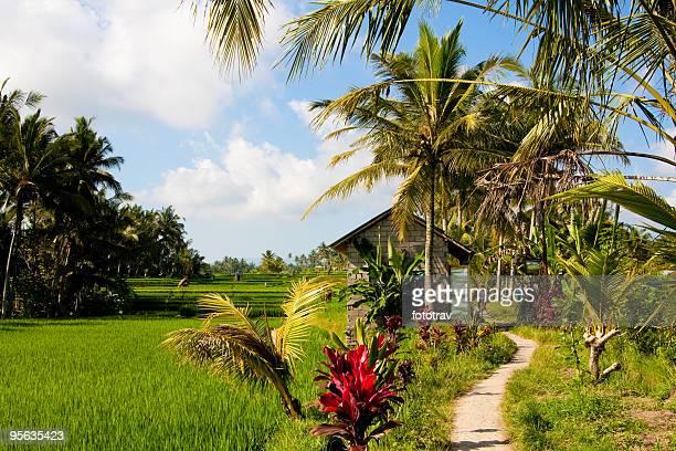 Rice paddy fields in Ubud, Bali, Indonesia