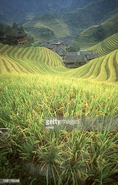 Rice paddy in Longsheng