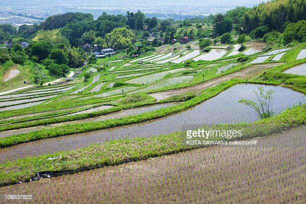 Rice Terrace at Inagura, Nagano Prefecture, Honshu, Japan