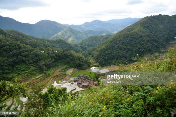 Rice terrace Banaue Philippines
