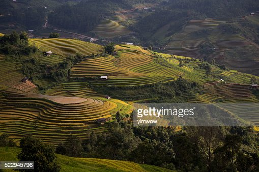 Rice Terrace Farm In Vietnam Stock