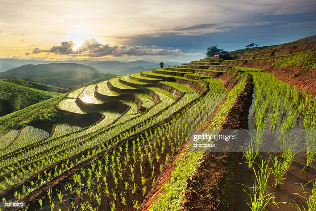 Rice Paddy Patterns