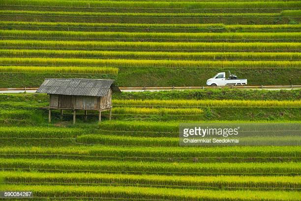 Rice terraces at Mu Cang Chai