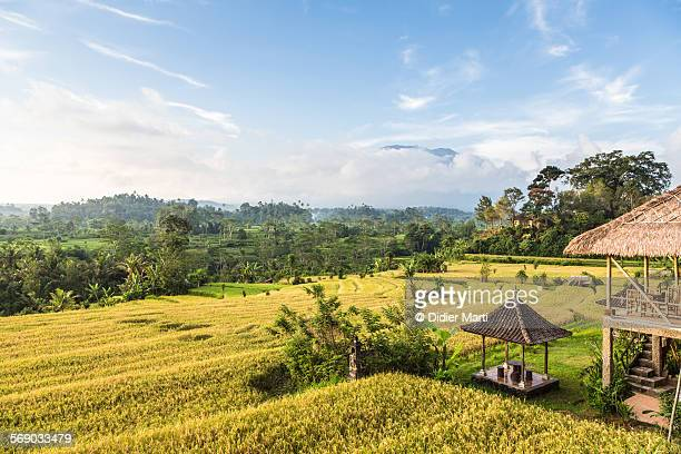 Rice terraces in Bali, Indonesia