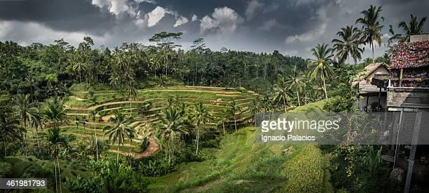 Rice terraces in Ceking, Ubud