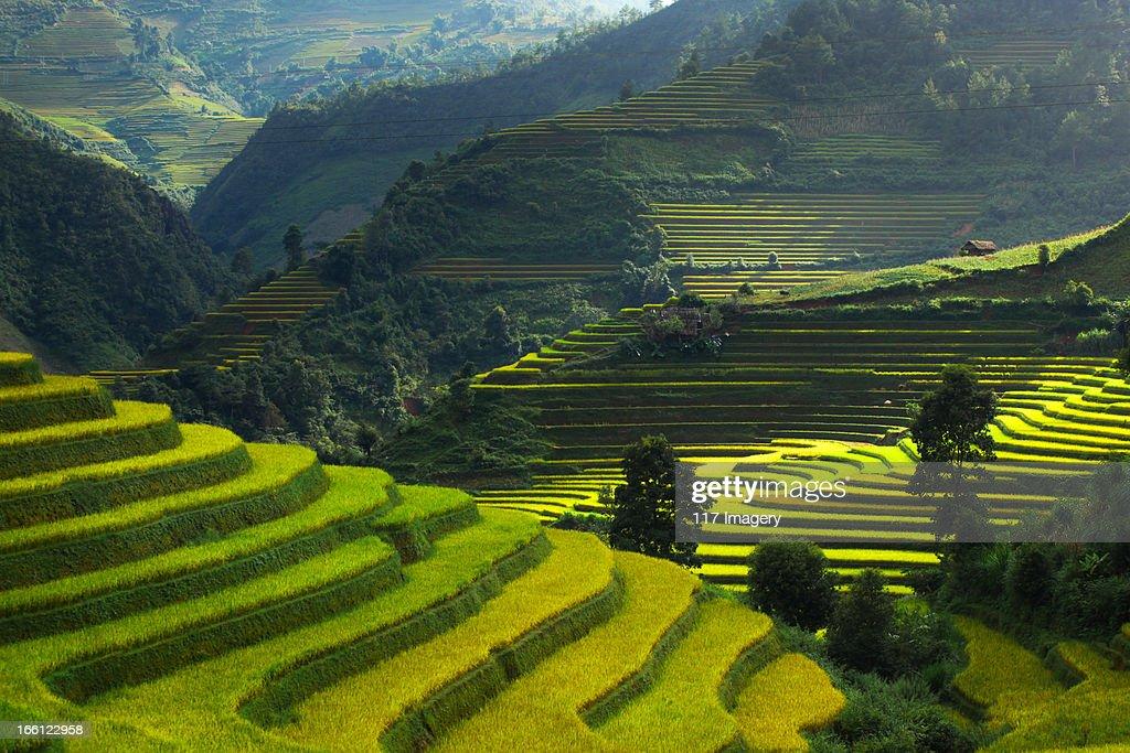 Rice terraces in Mu Cang Chai, North Vietnam