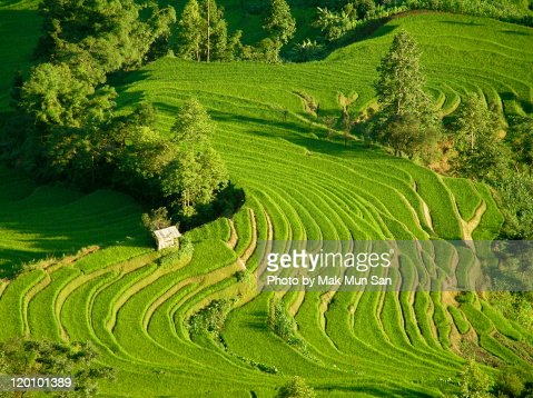 Rice terraces in Yuanyang, Yunnan province, China
