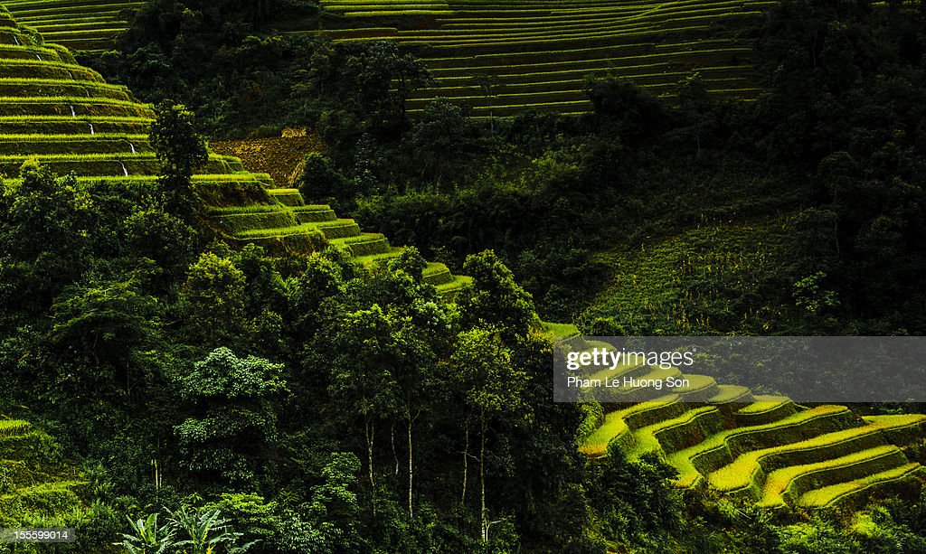 Rice terraces like the stairways : Stock Photo