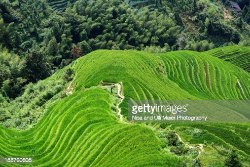 Rice terraces near Dazhai village in Longsheng Cou
