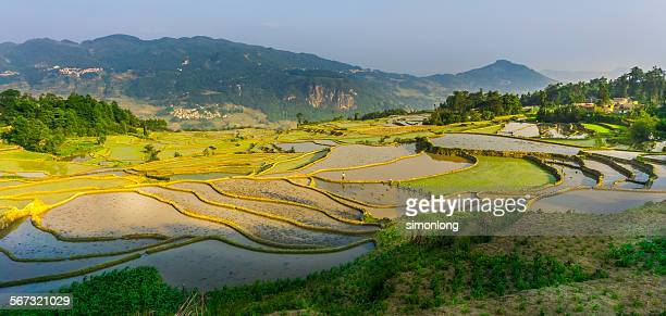 Rice terraces near Yuanyang,China
