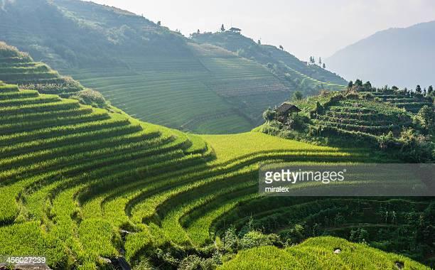 Rice Terraces of Longji Titian near Ping'an in China