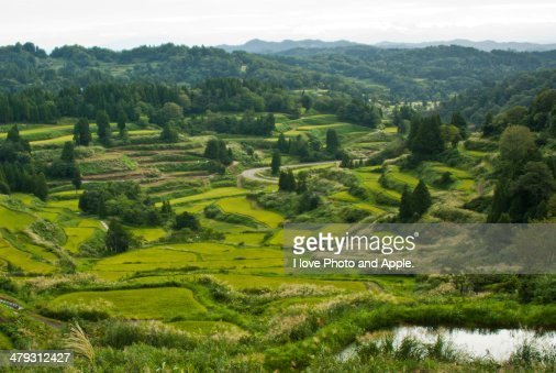 Rice Terraces of the fall